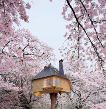 Teahouse Tetsu, Rumah Pohon