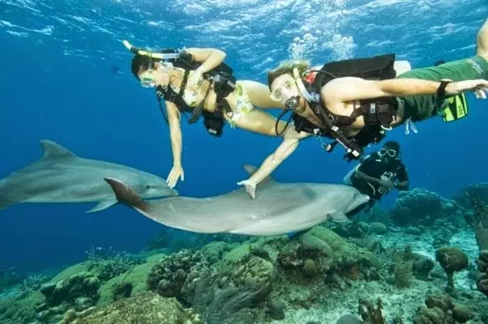 Hobi snorkeling